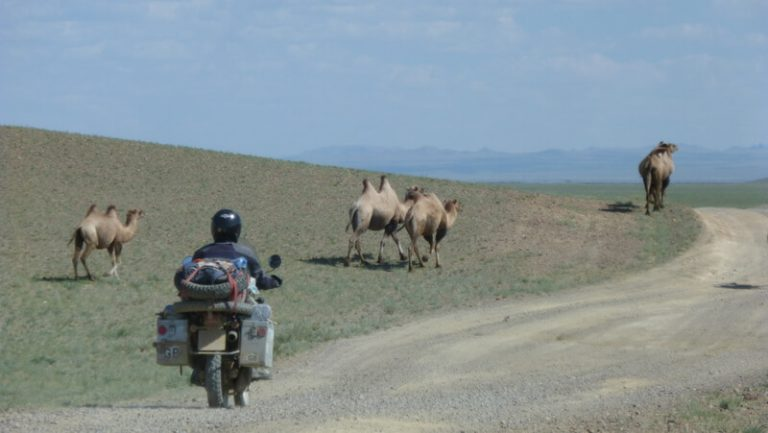 Day 62 'We should go back past the camels and do a right.' I say 'That should take us in the right direction'